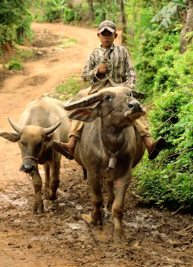 Kind auf Büffel lizenzfreie stockbilder