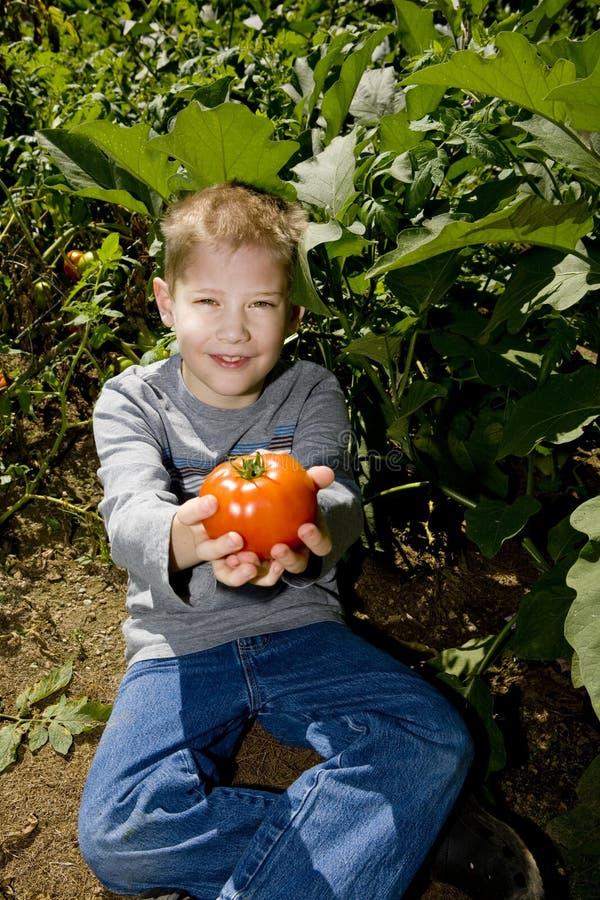 Kind bietet Tomate an lizenzfreies stockfoto