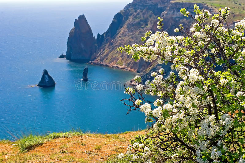 Kind on cape Fiolent royalty free stock photo