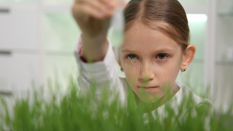 Kind in Chemielaboratorium, het Experiment van de Schoolwetenschap, die Tarwezaailingen planten stock afbeeldingen