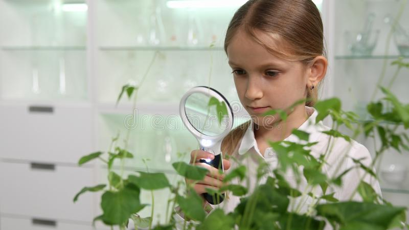Kind in Chemielaboratorium, Schoolmeisje die Installaties Onderwijsproject bestuderen stock afbeeldingen