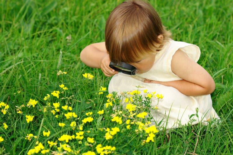 Kind, das Blumen durch Vergrößerungsglas betrachtet stockbilder