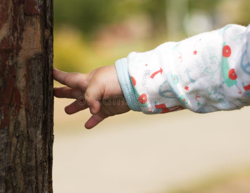 Kind, das den Baum berührt lizenzfreie stockfotografie