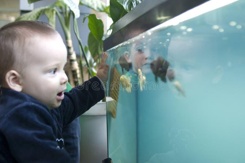 Kind, das Fische betrachtet lizenzfreie stockfotografie