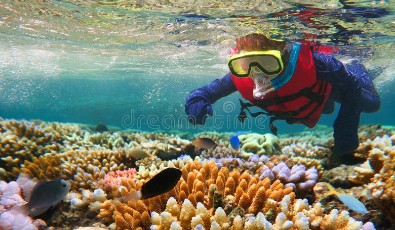 Kind, das in Great Barrier Reef Queensland Australien schnorchelt stockfotografie