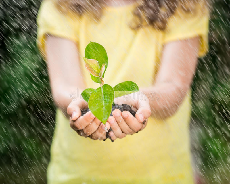 Kind, das Jungpflanze im Regen hält lizenzfreies stockbild