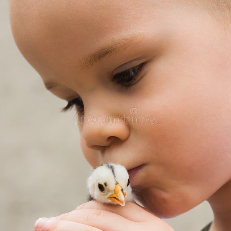 Kind, das kleinen Kükenvogel küsst stockfotos