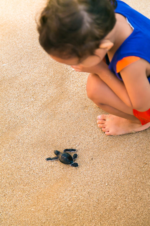 Kind, das nah an der Babymeeresschildkröte aufpasst stockfotografie
