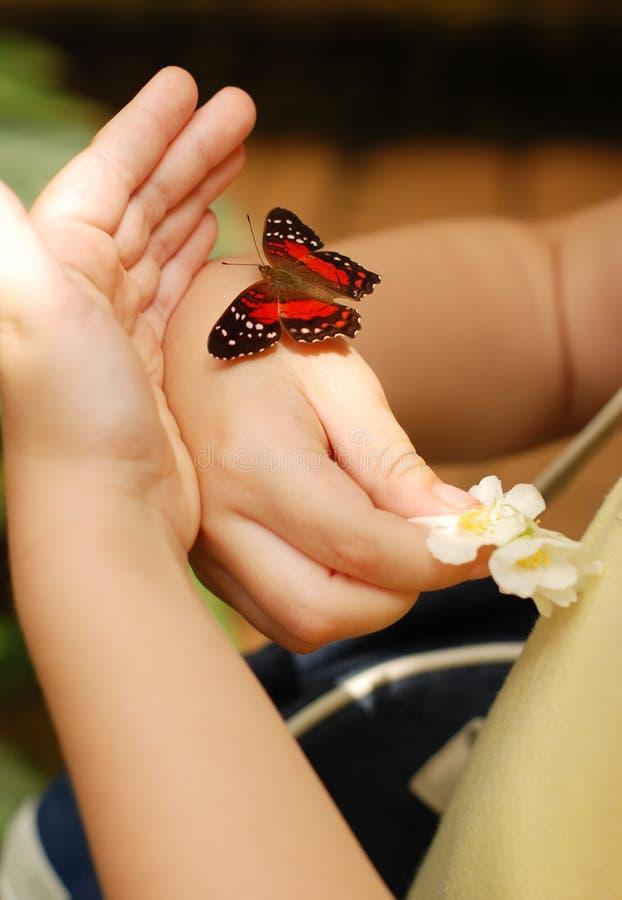 Kind dat kleine vlinder beschermt stock afbeeldingen