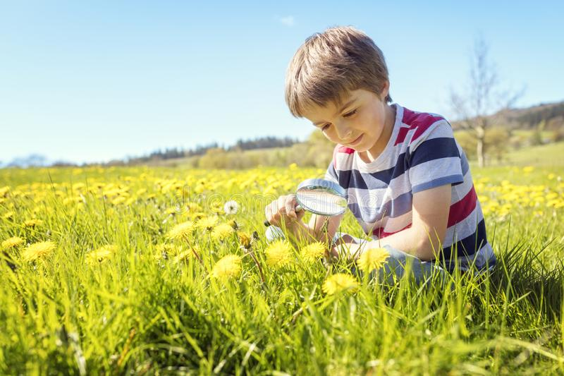 Kind die aard in een weide onderzoeken stock afbeelding