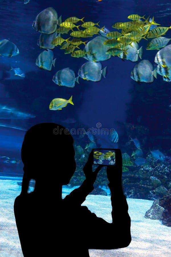 Kind, die op de haai letten zwemmend in oceanar royalty-vrije stock afbeeldingen