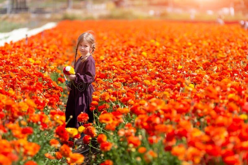 Kind die wilde bloemen op gebied plukken De jonge geitjes spelen in een weide en oogstbloemboeket voor moeder op de zomerdag stock fotografie