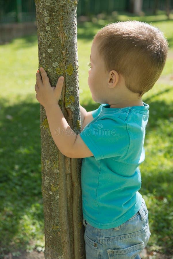 Kind die zich aan een boom vastklampen royalty-vrije stock afbeelding