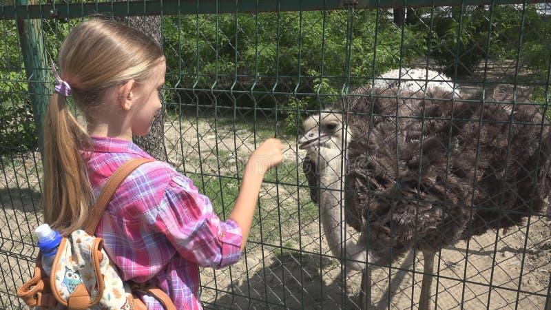 Kind in Dierentuinpark, Meisje het Voeden Struisvogel, Jonge geitjesliefde Verzorgingsdieren, Huisdierenzorg stock afbeelding