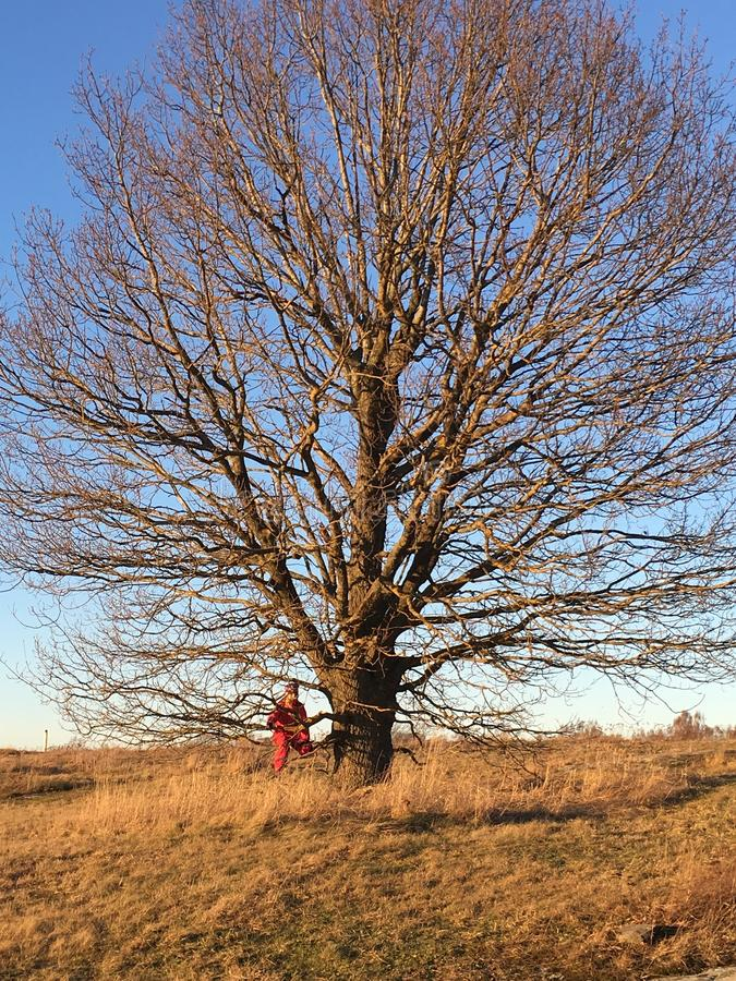 Kind in een boom royalty-vrije stock foto