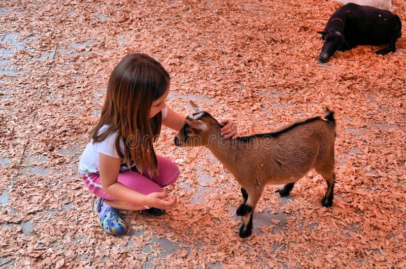 Kind en jonge geit royalty-vrije stock fotografie