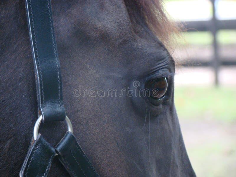 Kind Eye royalty free stock photography