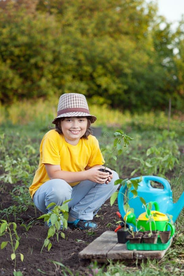 Kind gießt frische Sprösslinge von der Gießkanne im Sommer GA stockfotos
