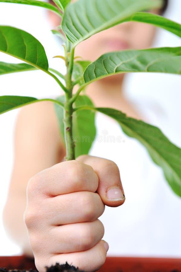 Kind, hand met groene geïsoleerdee installatie stock foto