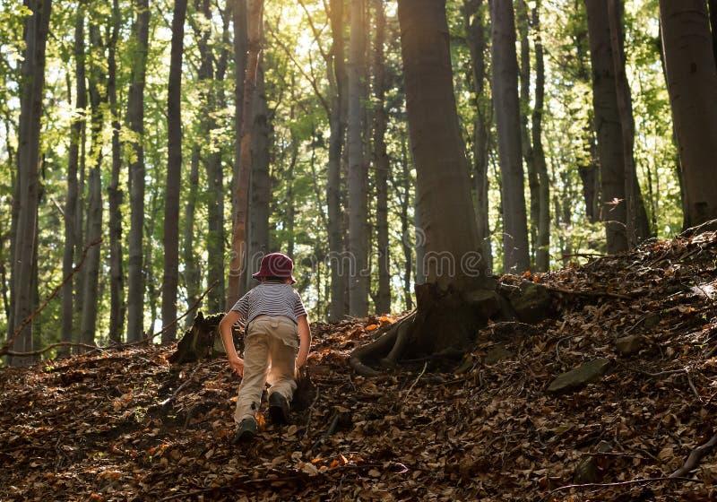 Kind in het bos royalty-vrije stock foto's