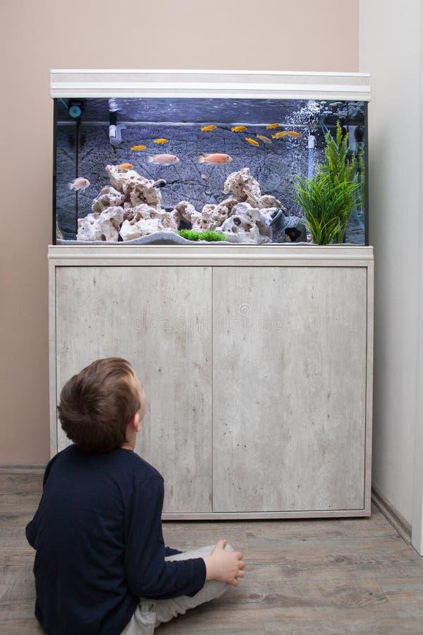 Kind het letten op vissentank stock foto's