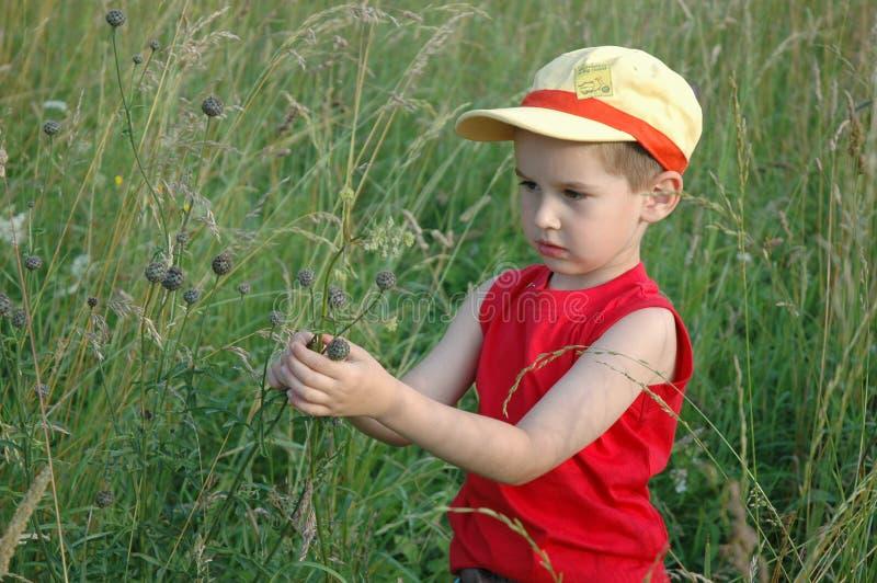 Kind im Gras stockbild