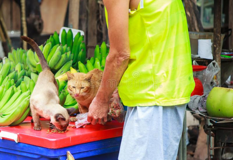 Kind male owner feeding cute hungry cats pet food at street food fruit market. Animal Care, Adoption, Pet Health, Cat Love,. Mammals, Hygiene, Rural Life stock photos