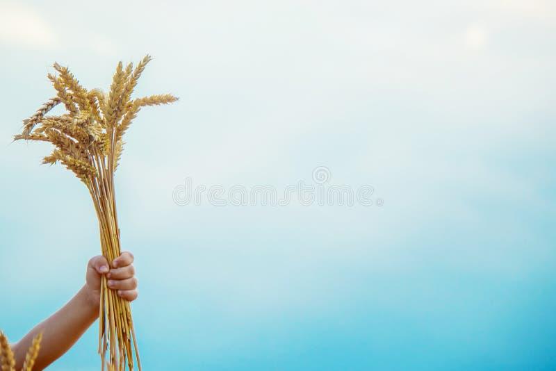 Kind op een tarwegebied stock foto