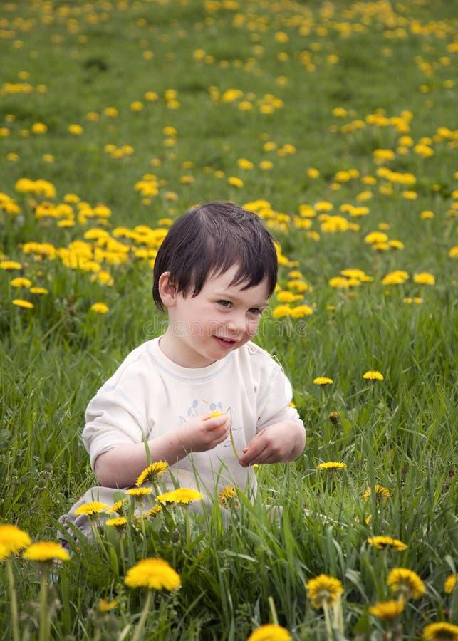 Kind in paardebloemen royalty-vrije stock fotografie