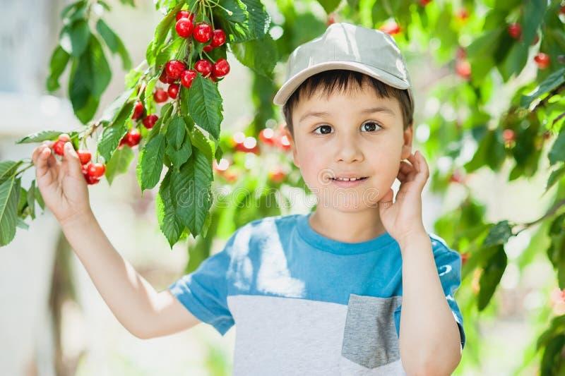 Kind pics een kers van de boom gezonde kinderjaren, vakanties in het dorp royalty-vrije stock fotografie