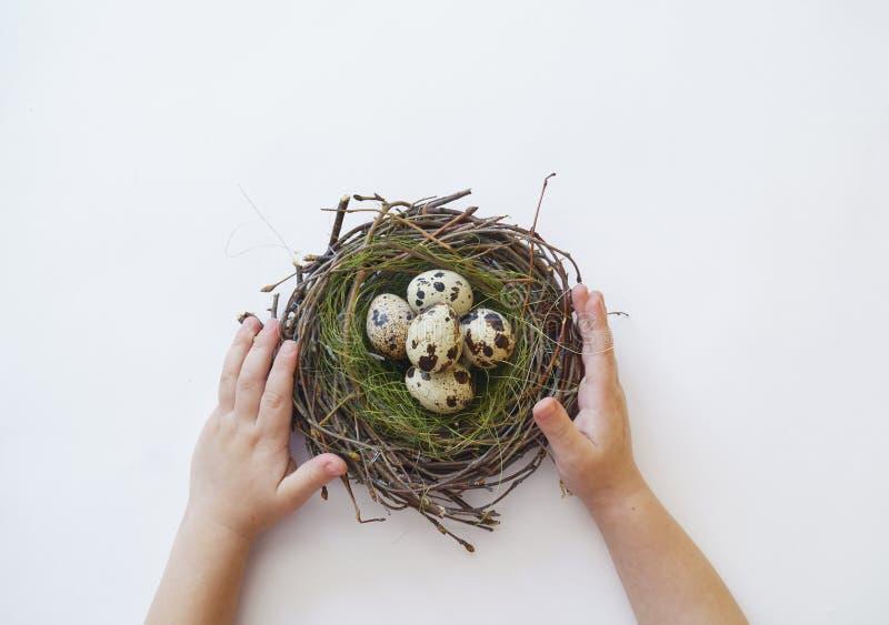 Kind-` s übergibt das Halten eines Vogel ` s Nest Nestes mit Wachteleiern stockbilder