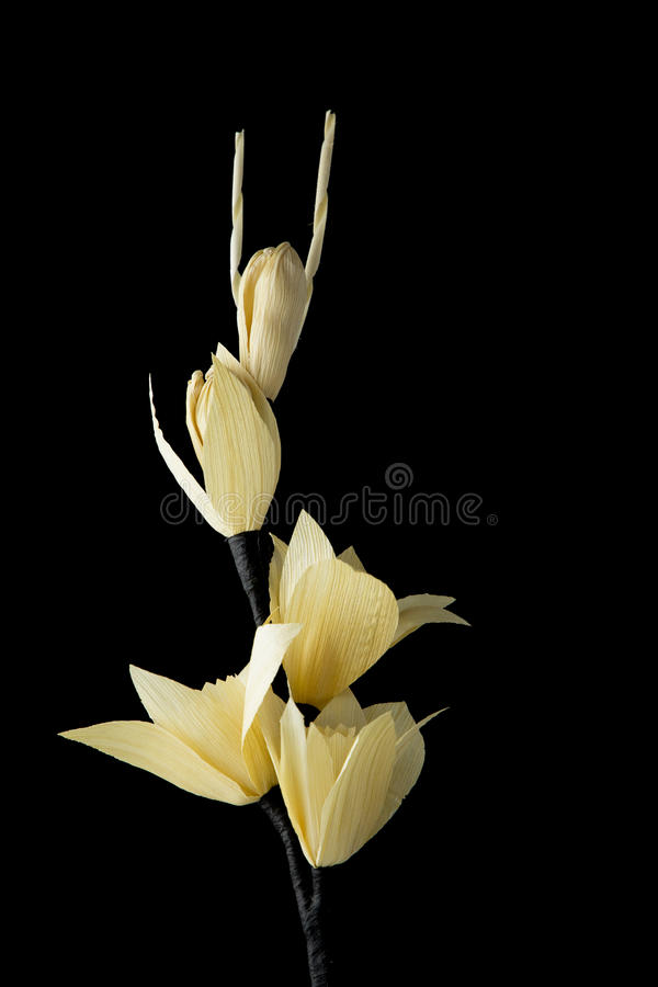 Kind of wood flower. On black background with copy space; to be placed on the site of cremation in Thailand & x28;Dok Mai Jan& x29 stock photos