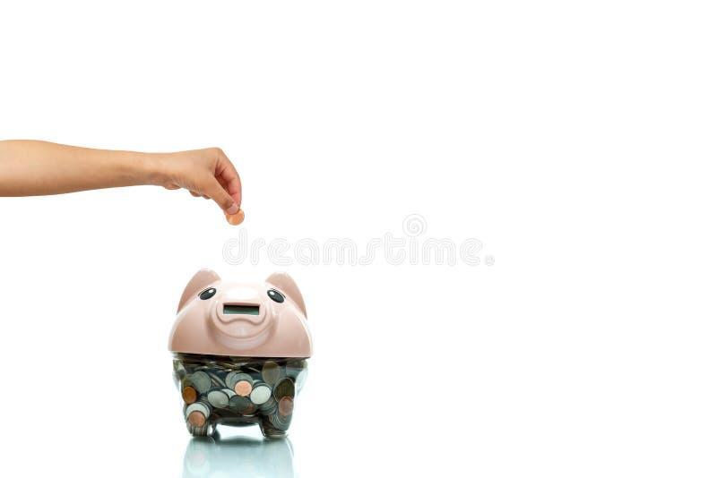 Kinder übergeben das Setzen der Münze in ein Sparschwein, das im weißen Hintergrund lokalisiert wird stockbilder