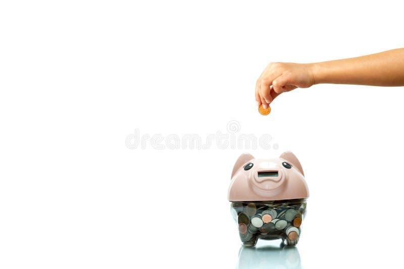 Kinder übergeben das Setzen der Münze in ein Sparschwein, das im weißen Hintergrund lokalisiert wird stockfotos