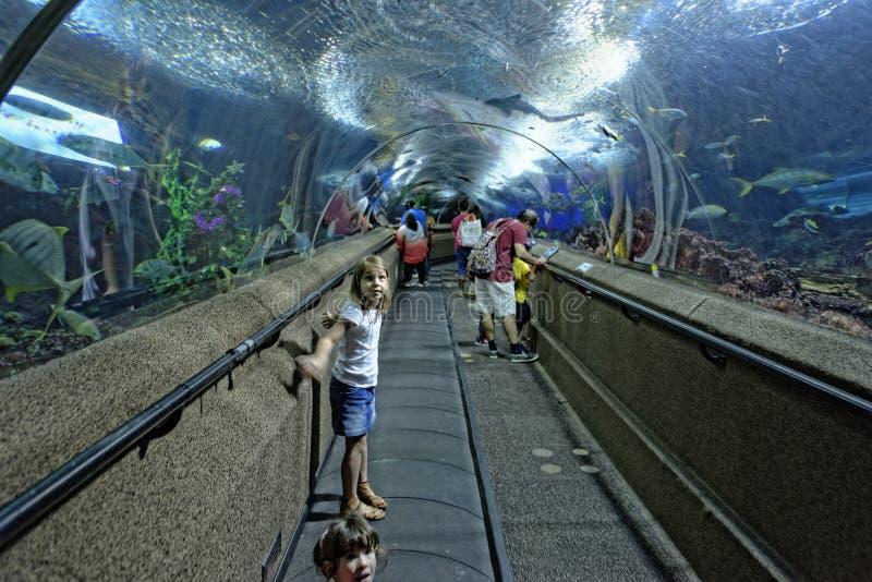 Kinder am Aquarium in Singapur stockbilder