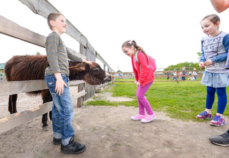 Kinder am Bauernhofzoo, zum der Tiere einzuziehen Schüler ziehen den Esel auf dem Bauernhof ein lizenzfreie stockbilder