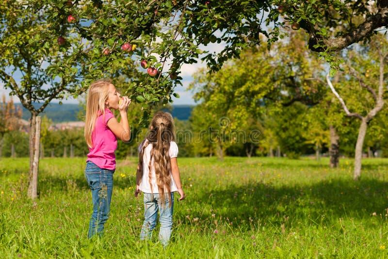 Kinder, die Äpfel essen stockbild