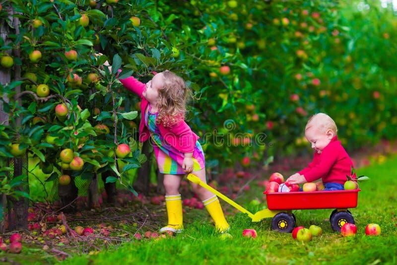 Kinder, die Apfel auf einem Bauernhof auswählen stockfotos