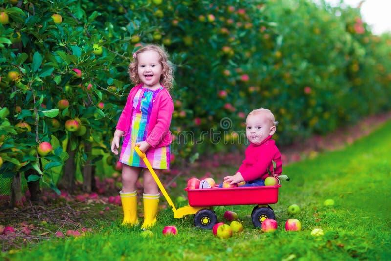 Kinder, die Apfel auf einem Bauernhof auswählen stockfotografie