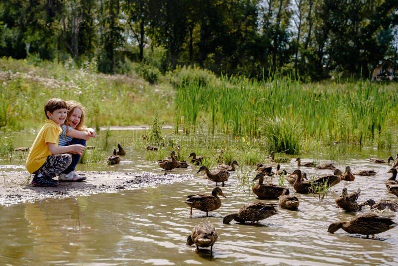 Kinder, die Enten auf verlassenem See einziehen lizenzfreies stockfoto