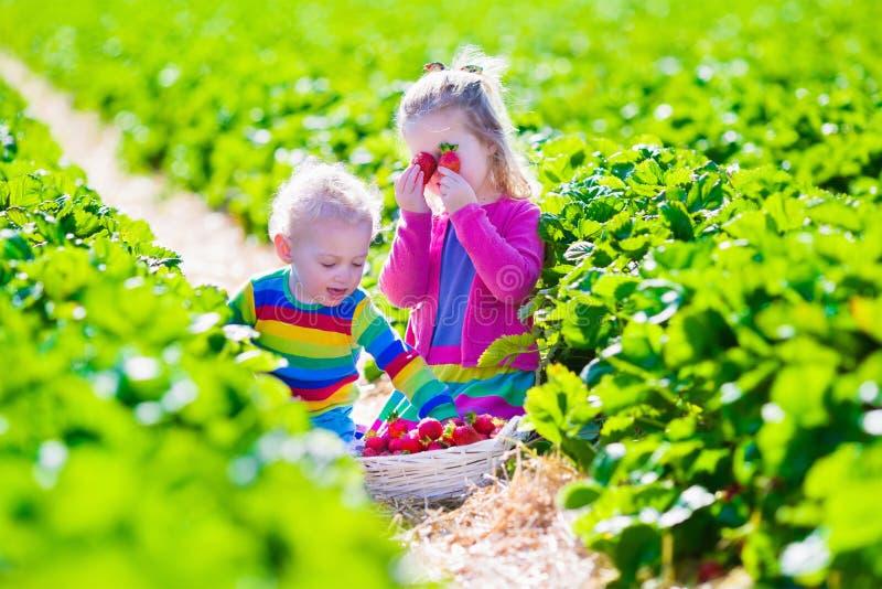 Kinder, die frische Erdbeere auf einem Bauernhof auswählen stockfotos