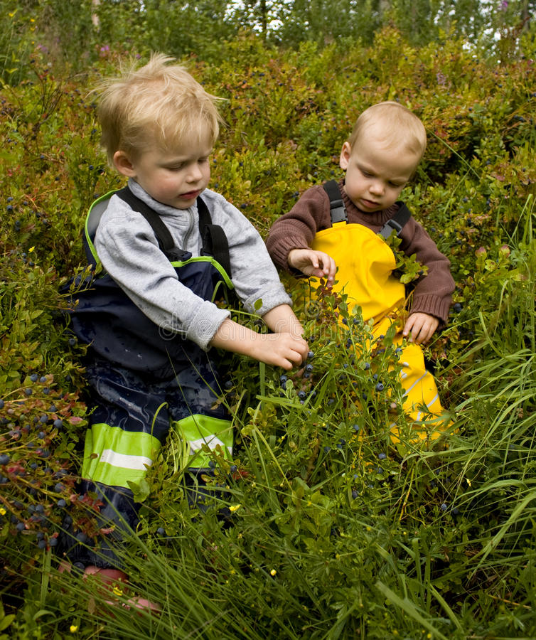 Kinder, die Heidelbeeren auswählen lizenzfreie stockbilder