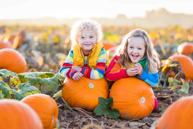 Kinder, die Kürbise auf Halloween-Kürbisflecken auswählen lizenzfreie stockfotografie