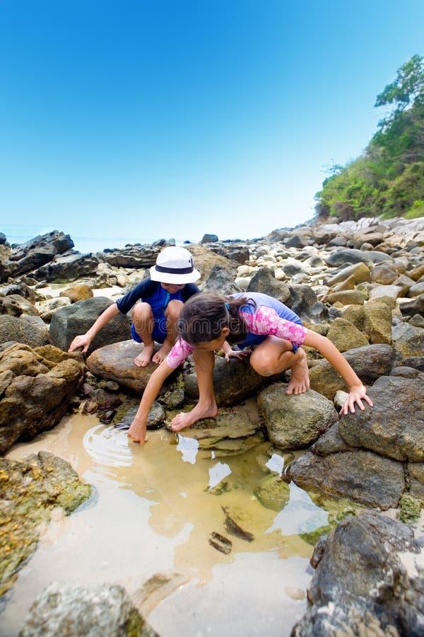 Kinder, die kleine Geschöpfe im rockp suchen lizenzfreies stockbild