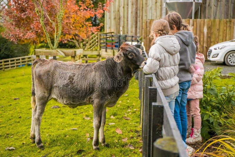 Kinder, die mach's gut und eine Kuh auf einem Bauernhof eingezogen worden sein würden lizenzfreie stockbilder
