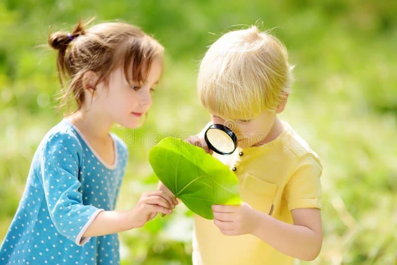 Kinder, die Natur mit Lupe erforschen Nahaufnahme Wenig Junge und Mädchen, die auf Blatt mit Vergrößerungsglas schauen stockfoto