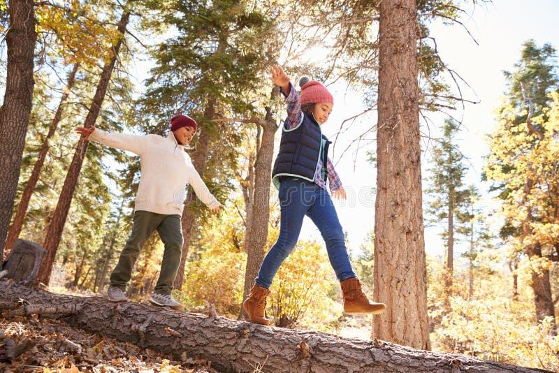 Kinder, die Spaß haben und auf Baum im Fall-Waldland balancieren stockbilder