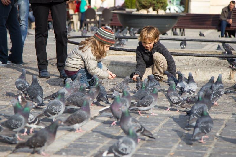 Kinder, die Tauben einziehen stockfotos