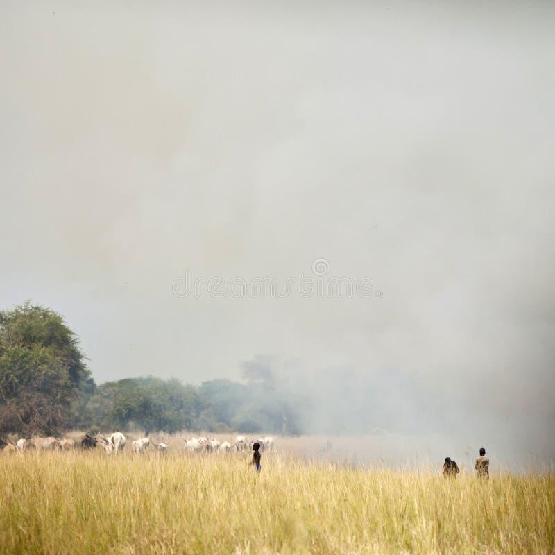 Kinder, die Vieh, Sudan in Herden leben stockbild