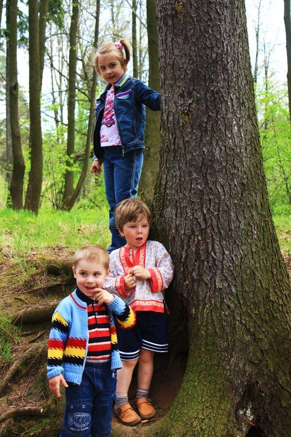 Kinder im Wald stockfotos